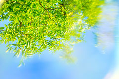 Artystyczny, wiosna tło z zieleń liśćmi, niebieskie niebo i specjalny plama skutek, zdjęcia stock