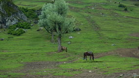 Aru valley in Pahalgam-5. A beautiful scene of a greenery of a farmland in a Kashmir Royalty Free Stock Images