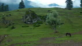 Aru valley in Pahalgam-6. A beautiful scene of a greenery of a farmland in a Kashmir Royalty Free Stock Images