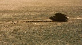 Aruba Stockfoto