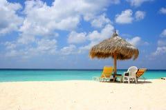 aruba海滩老鹰 库存照片