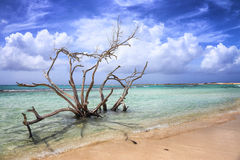 Aruba: Baby beach. Blue sea and white beach in Aruba stock images