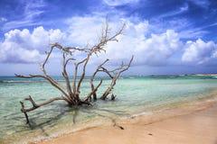 Aruba: Behandla som ett barn stranden Arkivbilder