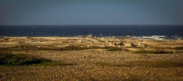 Aruba bild med Palm Beachhotell och Atlantic Ocean Royaltyfri Fotografi