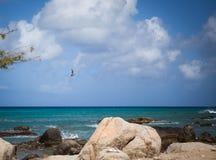 Aruba coastline with pelican. Pelican flying above the aruban coastline Royalty Free Stock Photo