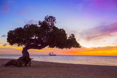 Aruba Divi Divi Tree sunset Stock Image