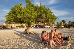 Aruba Divi Divi Trees Arkivbild