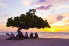 Aruba Divi Divi Trees Royaltyfri Fotografi