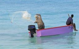 Aruba Fishermen Fish With Nets Stock Photo