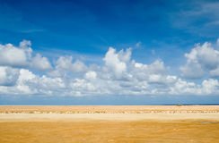 Aruba landscape. Yellow landscape Stock Photos