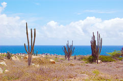 Aruba Landscape Royalty Free Stock Photo