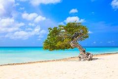 Aruba, Netherlands Antilles. Royalty Free Stock Photos