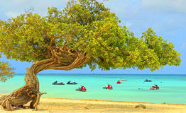 Aruba op de Caraïbische Zee Royalty-vrije Stock Afbeelding