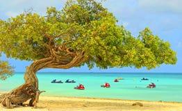 Aruba på det karibiska havet Royaltyfri Bild