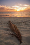 aruba solnedgång Arkivfoto