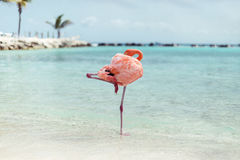 Aruba, spiaggia caraibica, FlamingoBeach di Aruba Immagine Stock