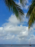 Aruba Stock Photography