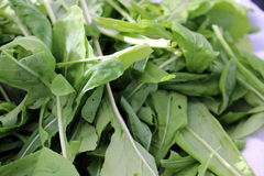 Arugala. Arugula is a leafy green also known as salad rocket from the French roquette Royalty Free Stock Image