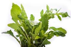 Arugala Blätter Stockfotografie