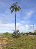 arugam drzewka palmowe podpalani kaktusowi Obrazy Royalty Free