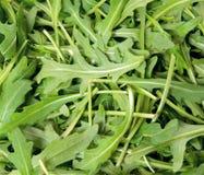 arugula πράσινο Στοκ φωτογραφία με δικαίωμα ελεύθερης χρήσης