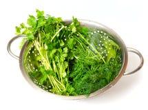 arugula πράσινο Στοκ Εικόνα