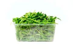 arugula πράσινο Στοκ Φωτογραφία