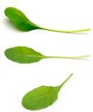 Arugula σε ένα άσπρο υπόβαθρο Στοκ φωτογραφίες με δικαίωμα ελεύθερης χρήσης