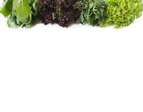 Arugula, σπανάκι, κόκκινο και πράσινο μαρούλι σε ένα άσπρο υπόβαθρο Στοκ φωτογραφίες με δικαίωμα ελεύθερης χρήσης