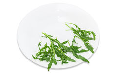Arugula στο πιάτο Στοκ εικόνες με δικαίωμα ελεύθερης χρήσης