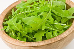 Arugula foto de stock royalty free