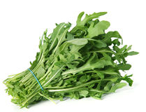 Arugula Royalty Free Stock Photo