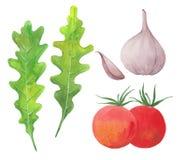 Arugula, ail et tomates Photographie stock