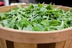 arugula baby lettuce Royalty Free Stock Photography