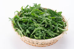 Arugula in the basket Stock Images