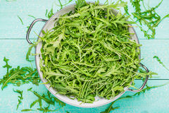 Arugula in a colander Stock Images