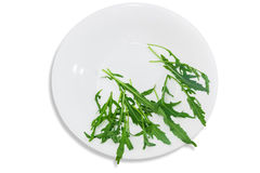 Arugula in dish Stock Photography