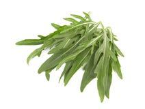 Arugula. Green arugula leaves isolated on a white background royalty free stock photo