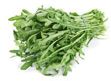 Arugula herb Stock Image