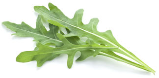 Arugula  herb. Royalty Free Stock Images