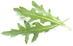 Arugula  herb. Stock Photo