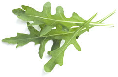 Arugula herb. stock images