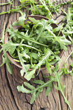Arugula  herb. Royalty Free Stock Images