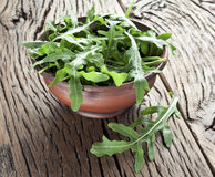 Arugula  herb. Royalty Free Stock Photography