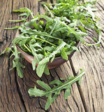 Arugula  herb. Royalty Free Stock Image