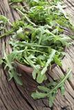 Arugula  herb. Royalty Free Stock Photography