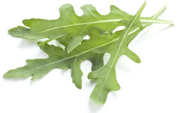 Arugula  herb. Stock Image