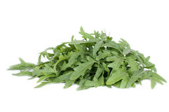 Arugula herbs Royalty Free Stock Photo