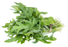 Arugula Isolated on white Royalty Free Stock Photography
