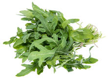 Arugula Isolated on white Stock Photography